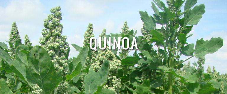 productos-quinoa-semillas