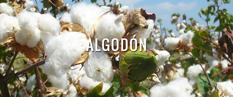 productos-algodon